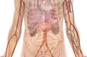 Detoksikacija jetre